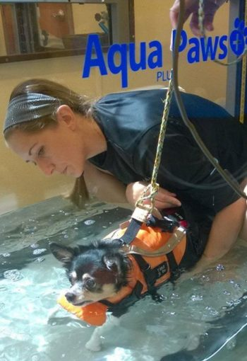 Underwater treadmill for Dogs in Bethlehem_Arriba
