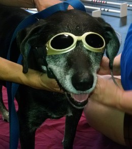 Laser Therapy for Dogs_Tyra