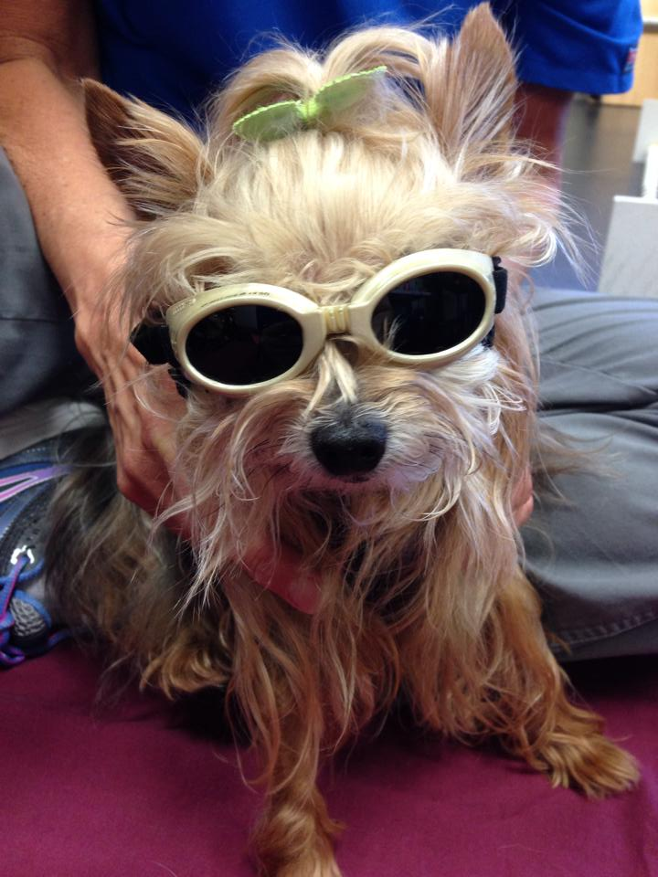 Laser therapy for dogs_Lexi