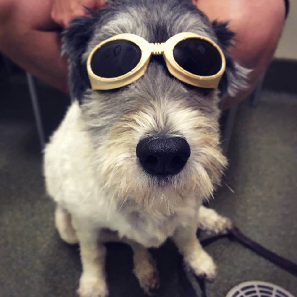 LASER therapy for Dogs_Dakota