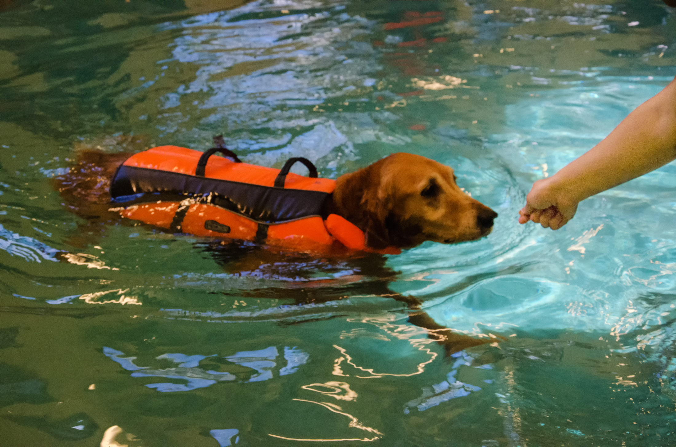 Swimming for dogs in Bethlehem_Bonnie